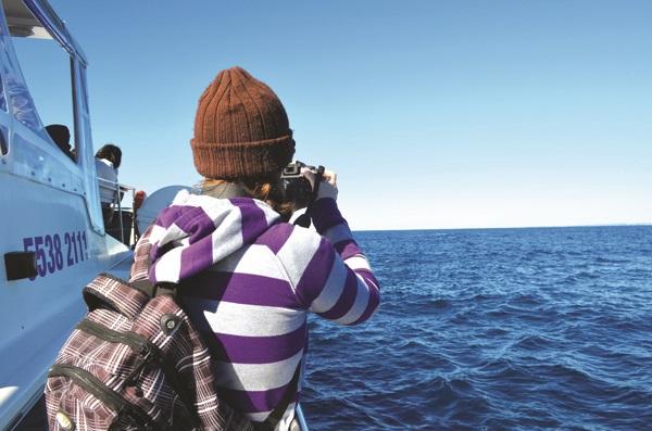 船上游客的指定动作——拿起相机对焦大海,发现目标即按下快门!