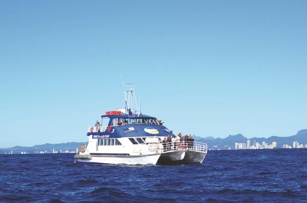 每年的六月至十一月期间,是赏鲸最佳时节。