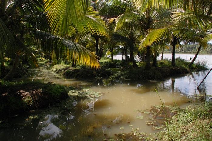 椰林与河道。