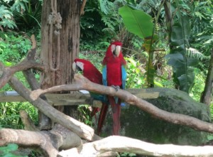 聪明的鹦鹉,比鸳鸯还专一的鸟类。