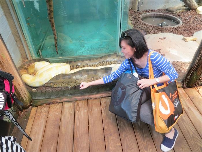 生物多样性探索区里的粗大森蚺,来自香港的小女子以其瘦弱手臂比较之。