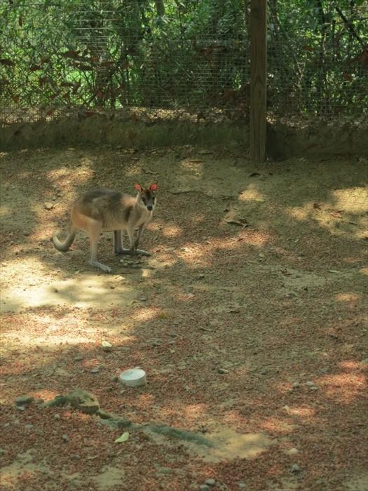 可爱动物区里头有只小袋鼠。自保方式是用粗大尾巴撑起身体,向敌人拳击脚踢一并来。
