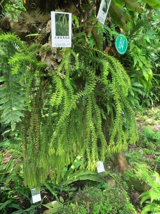 台湾原生区蕨类值得一看。