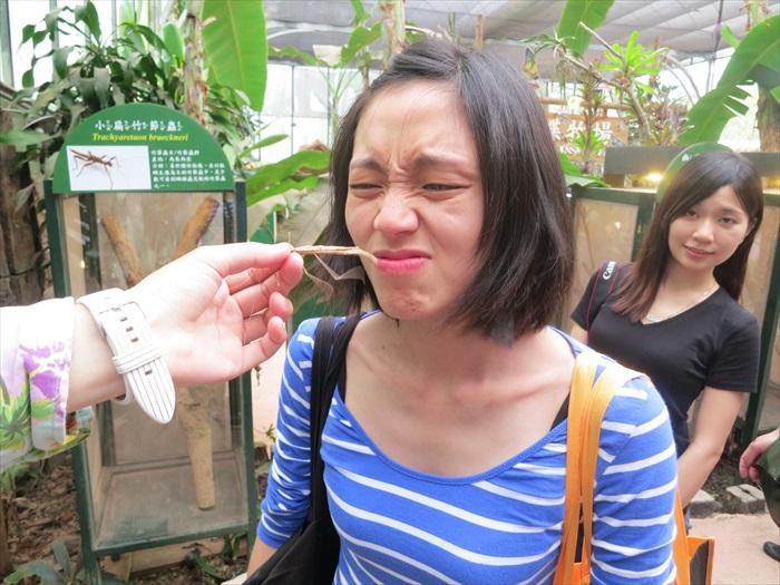 在蝴蝶园区内,媒体嗅竹节虫特殊气味时的模样。