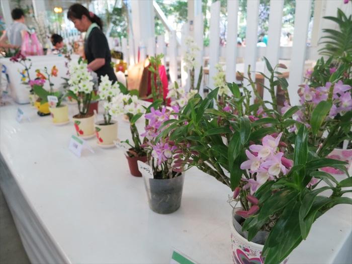销售柜台上摆着多盆超漂亮的兰花,弄得我心痒痒...