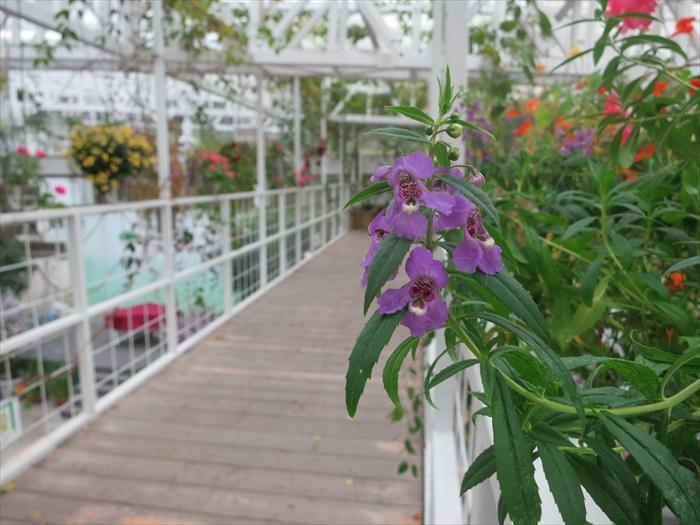 步道上的草花会依据季节和开花情况更换。
