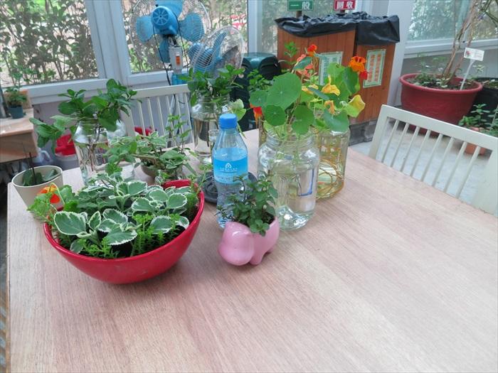 将植物全然融入生活,叫我向往不已。