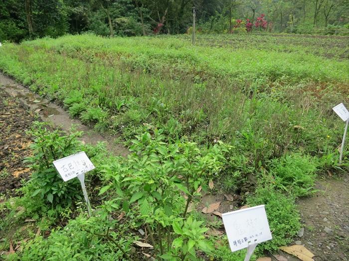头城的蔬菜园,是城市人在此的偷闲之地。