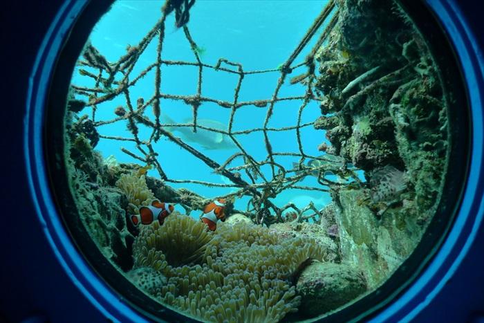 在深入海底约四公尺的塔下,可从圆筒式玻璃窗,欣赏一出出海底Live Show。