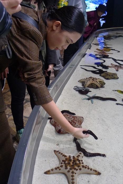 位于美丽海水族馆,让游客亲身触摸海星,感受真实的一面。