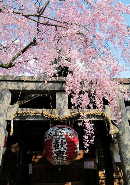 憧憬京都限定