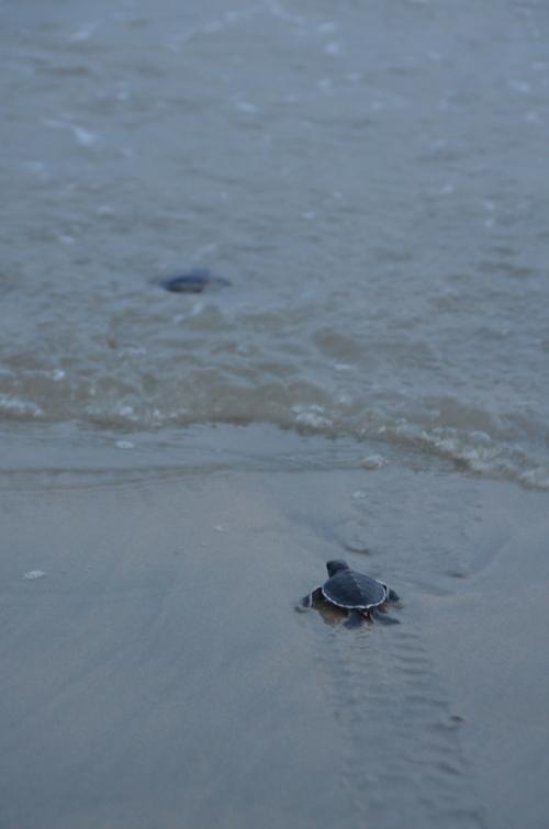 投入海洋的怀抱