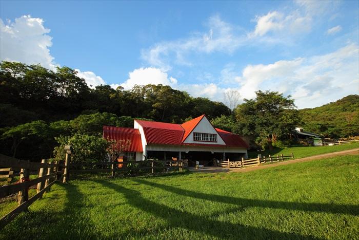 飞牛牧场重现童话中的场景。
