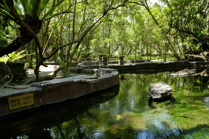 温泉公园绿意盎然。