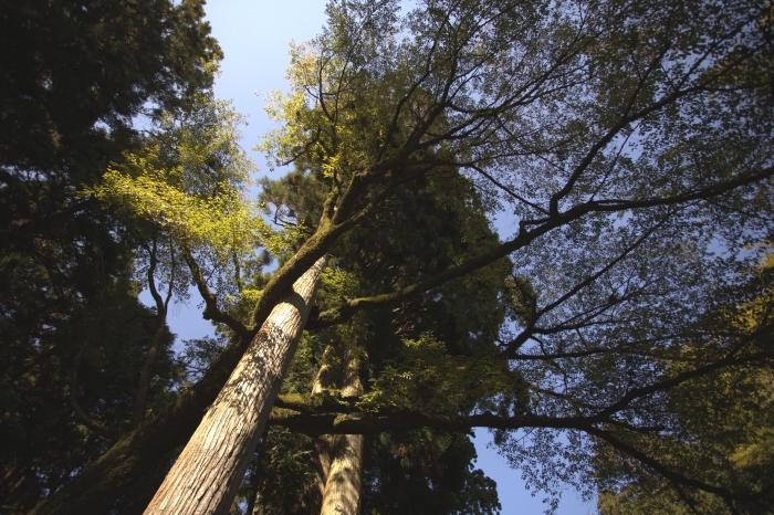 """连大树都明白""""互相扶持"""",为什么人就是做不到呢?"""
