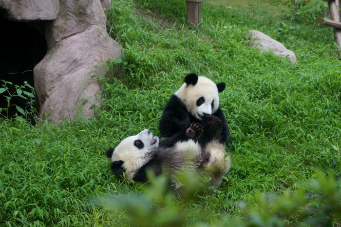 自得其乐,是熊猫的本领哟!