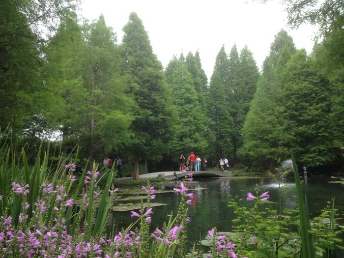 落羽杉为景观主轴。
