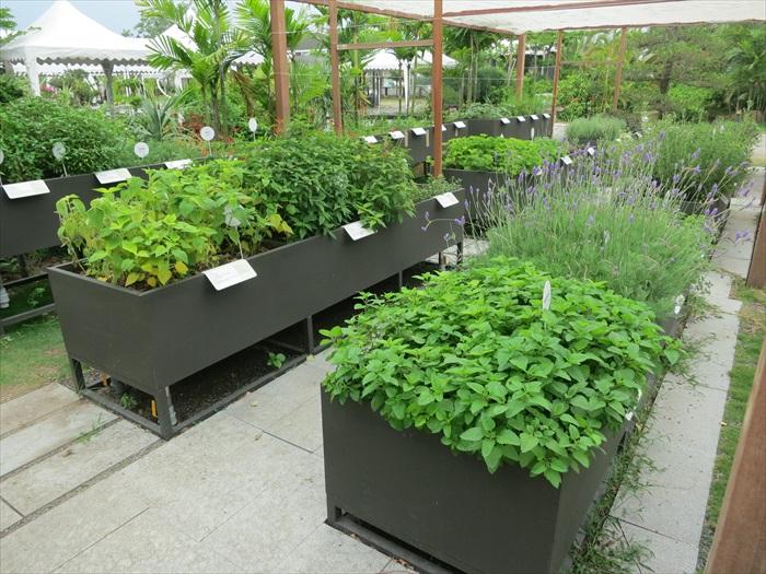 香草植物角落,栽植了多种香草。