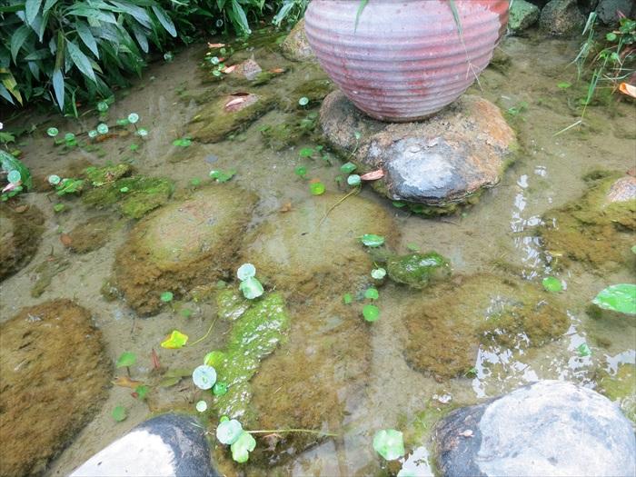 水生自然生态沟渠水质清澈,是水生动植物的乐园。