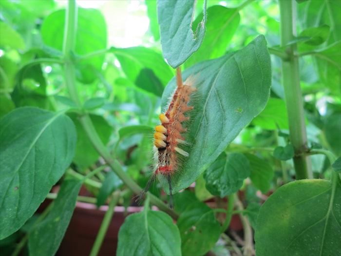 当然,并非所有毛虫都可爱,在没有专人在旁之下就不要乱碰哟!
