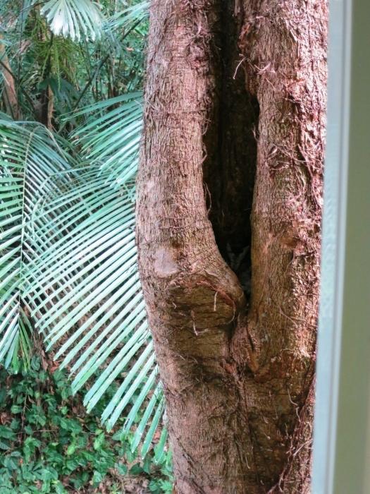 猫头鹰巢穴就在窗边,再好奇也不要惊动它哟。