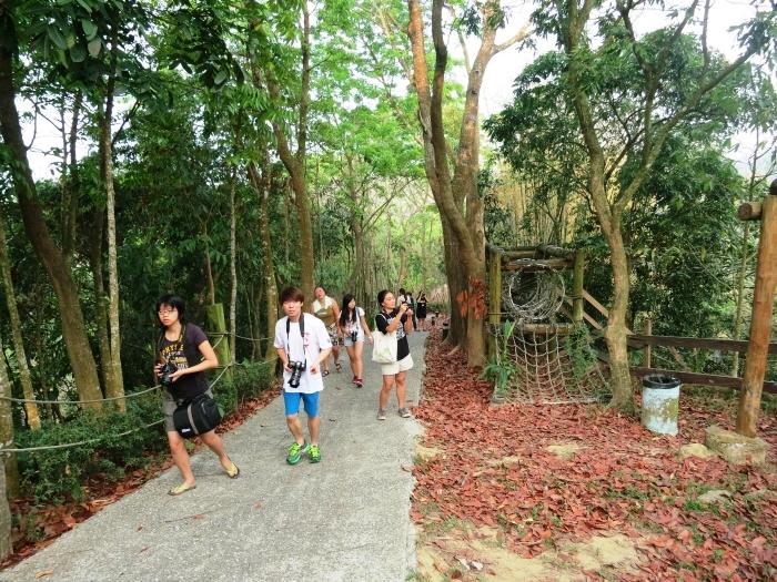 前往观景楼的路上,导览员叫大伙边观景,边收集地上的桃花心木种子。