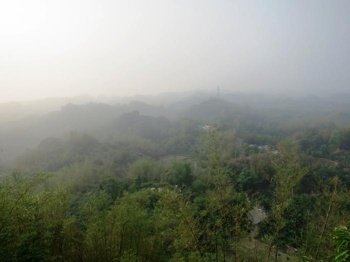 登上观景楼后,就可以在观景之余,还能在高处撒下桃花心木的种子,看种子如竹蜻蜓般旋转飞翔!
