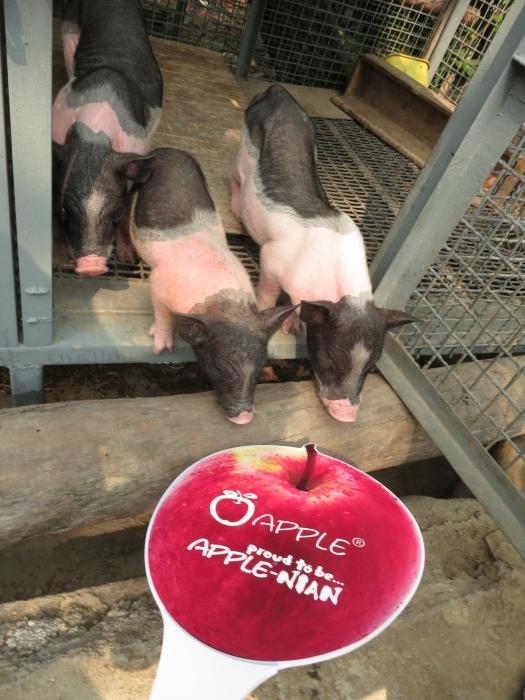 导览1结束,让迷你猪为寻宝揭开序幕!