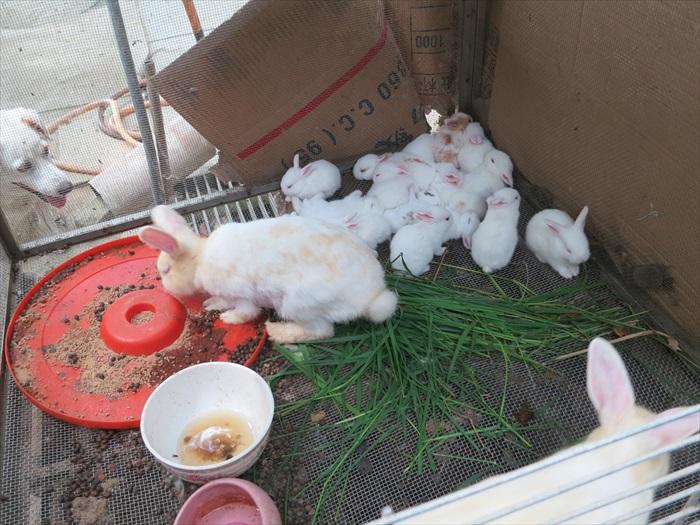 兔子恰好生了一窝兔宝宝,让女性媒体蜂拥围绕观看。