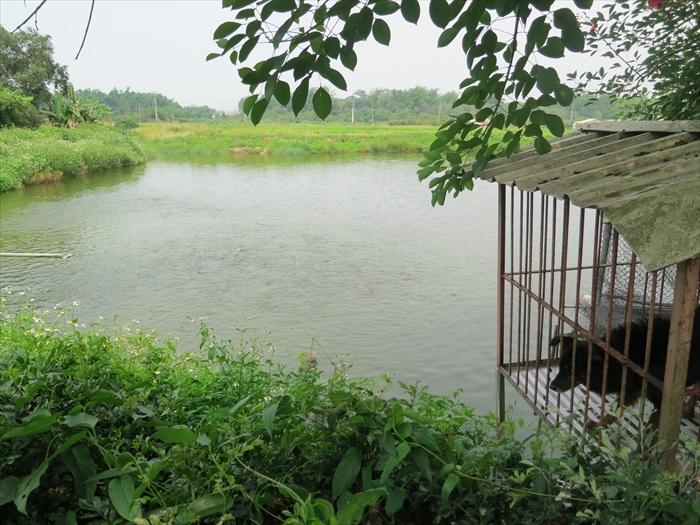 鸭庄内的其中一个大水塘,里面饲养者大量台湾鲷,鱼群抢食时画面壮观。
