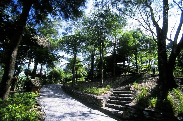 森林浴步道。