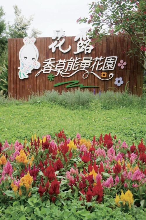 香草能量花园内种满各种奇花异草。