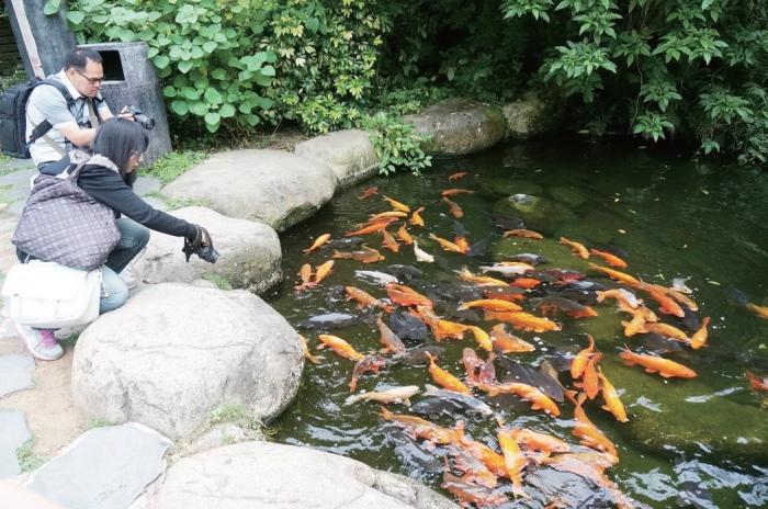鲤鱼池吸引游人驻足喂养。