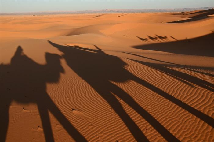 """那个傍晚,我们两辆四轮驱动车来到撒哈拉沙漠的美如卡Merzoug沙漠,大家分头坐上了7只骆驼朝着沙丘前进,我们也要铺成我们的撒哈拉故事,个个充满着期待,想象着骑在骆驼上的我们将会是多么""""三毛"""",一场传奇的沙漠探险之旅即将展开! 一个小时的路程,骆驼一步一步,我们在高高的骆驼上有点像悬在空中,摇摇晃晃,双手不但要抓紧,保持身体平衡,还得单手摄影,真不踏实。"""