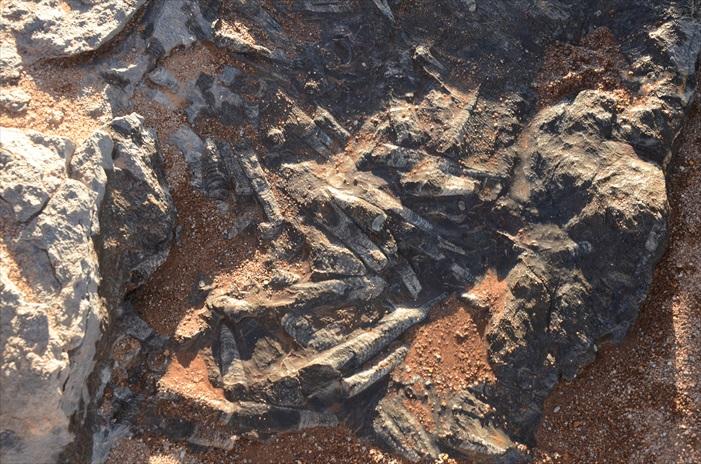 经历亿万年形成的化石,在撒哈拉一带非常常见。