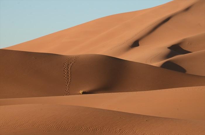 Chagaga柔软的沙地,一点都不好走,每一步都会陷入沙里。我在沙漠醒来的第二天发现沙丘上的夜晚行走过的动物脚印,不太深陷的印记,沙漠像是被点上小波点,形成美丽图案。