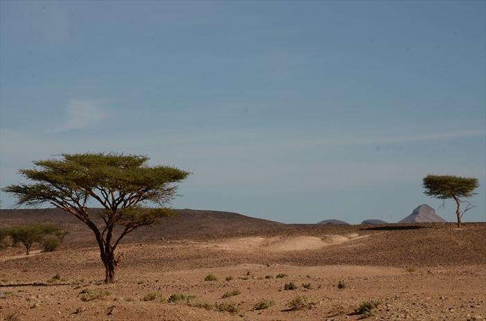 其实沙漠不是大家想象中大片浩瀚如海的沙丘,撒哈拉分各式不同的地形,有高地、山丘、土地、石沙、细沙、而且许多地方还长着沙地植物,植物也分各类型,有高灌木、低灌木、仙人掌等,都是生命力特强的种类。