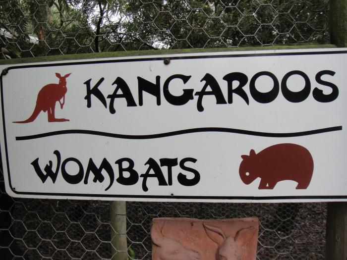 澳洲除了袋鼠,你知道的特有动物还有什么吗?