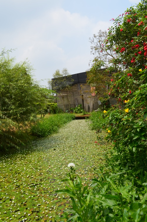 花、草、木、石、水是薰之园休闲农场的灵魂,无华的生态设施,让前来的客人,身与心都能得到放松及休息。