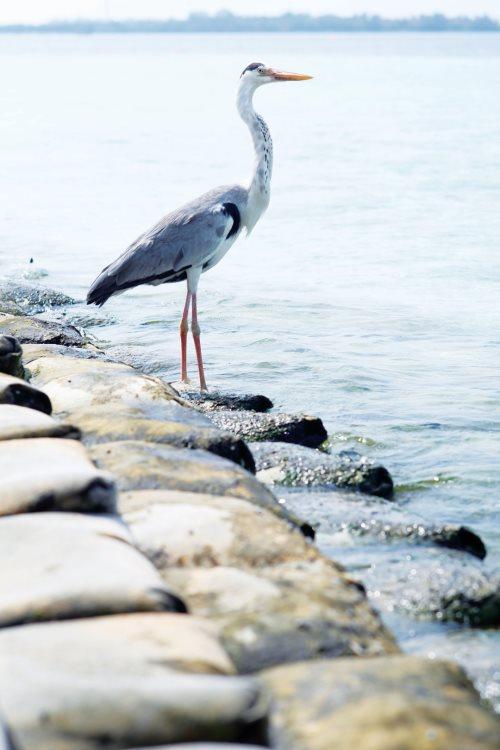 悠闲地在散布的海鸟。