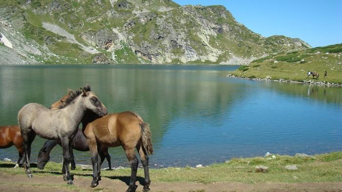 黑海海岸保加利亚