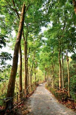 清晨到森林步道去享受芬多精的洗礼。
