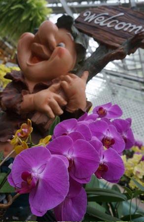 内容丰富的兰花贩售展示空间,不买也要来看看啊~