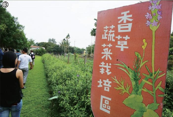 走进香草蔬菜园区,被满园的绿包围,连呼吸都成为一种享受~