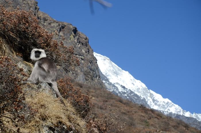 蓝塘国家公园里有许多罕见的动物,白毛猴是其中一种,它们性情温驯。
