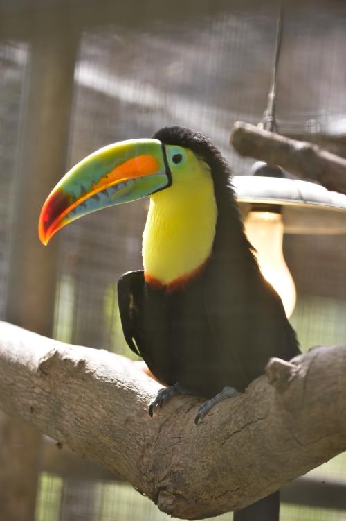 """这只""""彩虹巨嘴鸟""""是南园休闲农场里鸟园的镇园之宝!你看它的羽毛,颜色好梦幻哦!"""