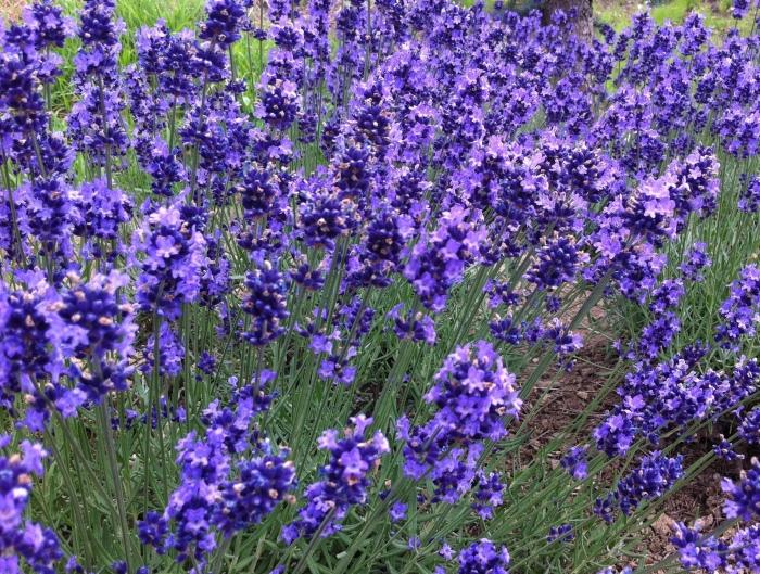 浑然天成的紫色,让它注定走浪漫路线。 (Photo by Jin Cheong)