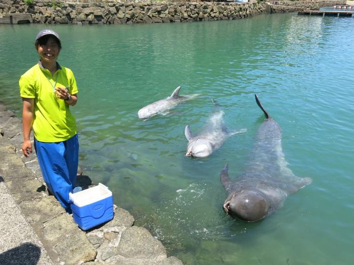 在太地町立鲸鱼博物馆,能够与海豚和鲸鱼近距离接触!