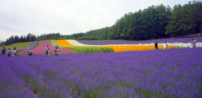 农场透过不同颜色的花朵作出颜色上的层次感。 (Photo by Forester Ong)