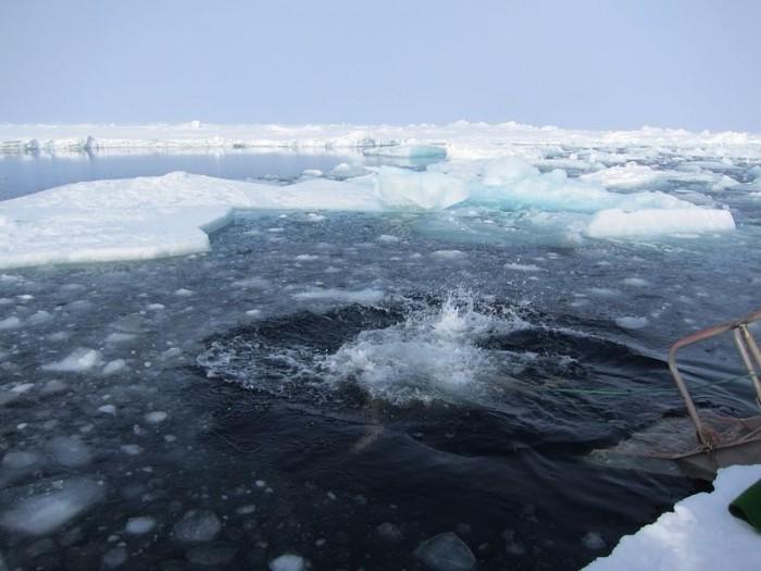 李桑参与了90°N跳冰海大行动的壮举(四 )